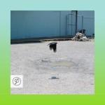 Tepr - Hypnotease EP
